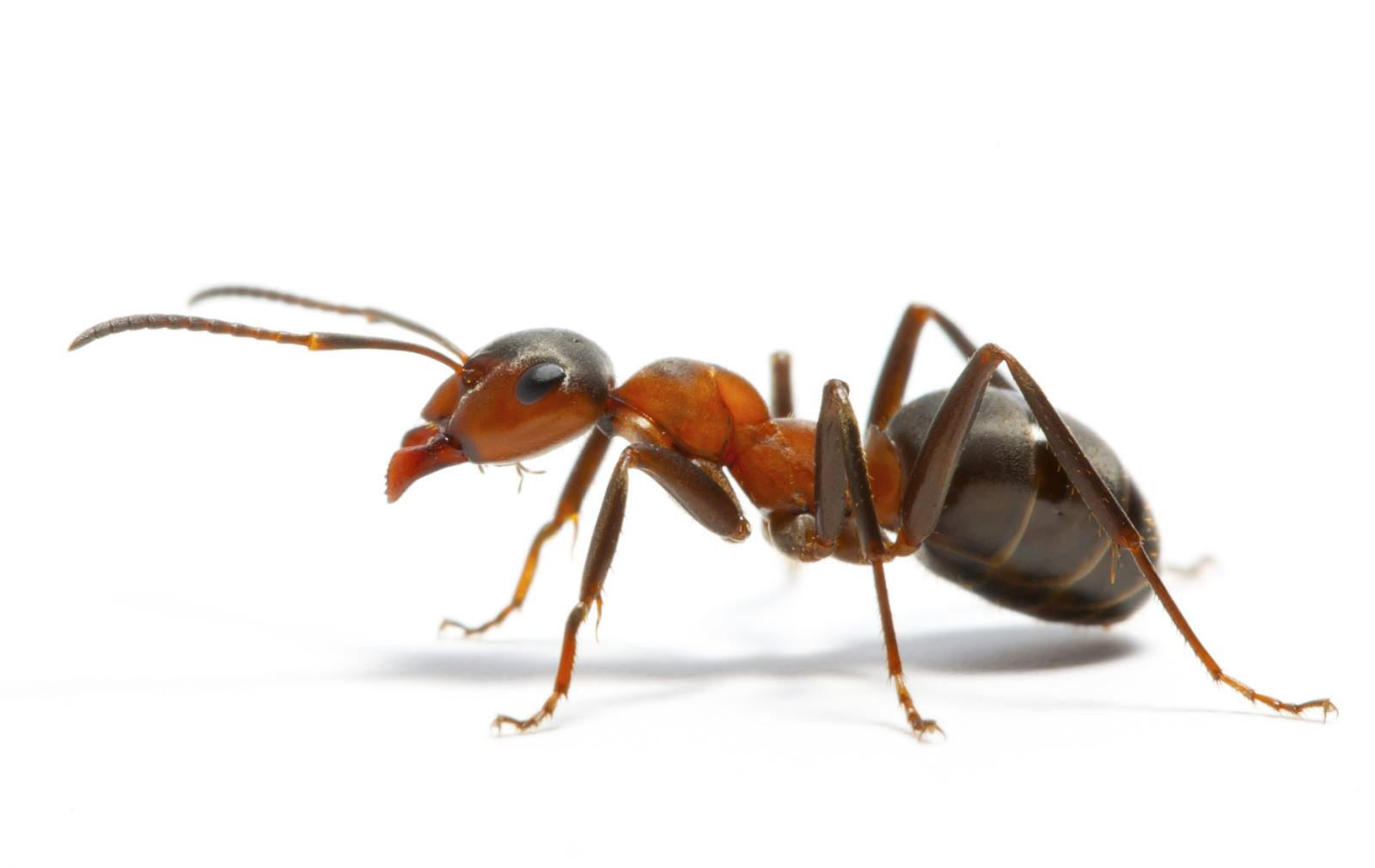 An ant walking on a surface