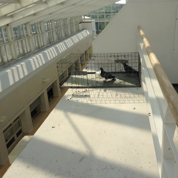 Bird proofing netting and spikes