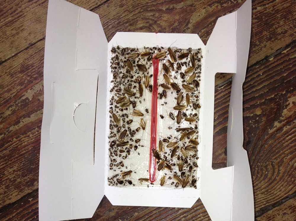 Cockroaches in a box
