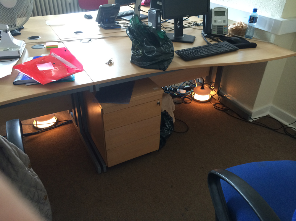Flea traps under an office desk